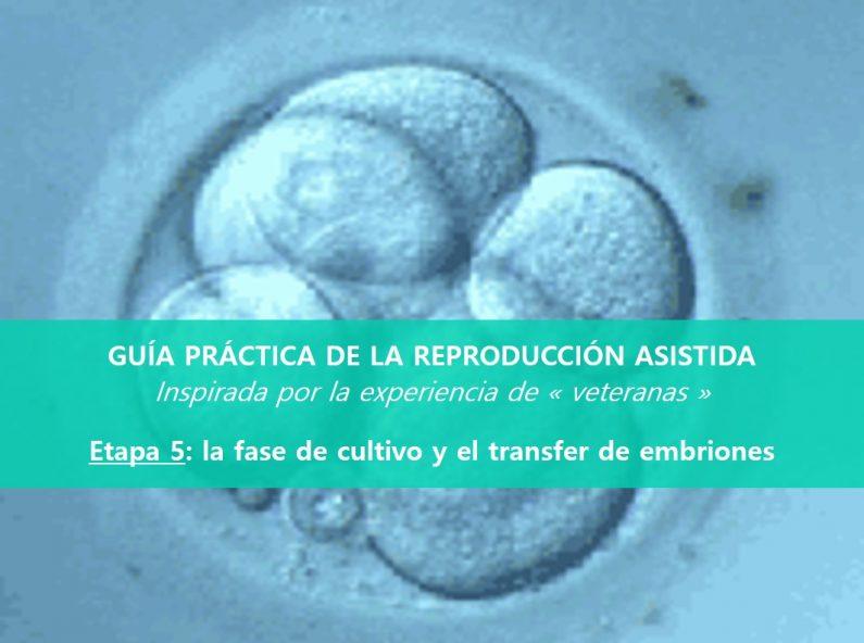 cultivo-transfer-embrionario