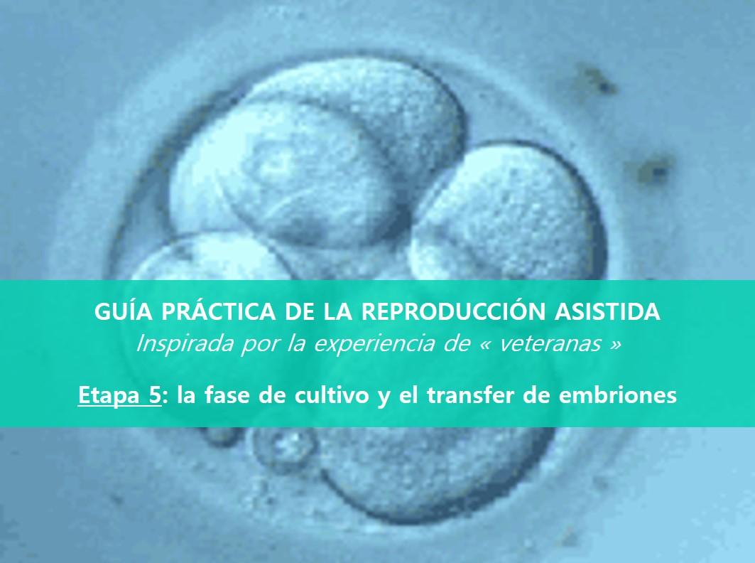 GUÍA PRÁCTICA DE LA REPRODUCCIÓN ASISTIDA: ETAPA 5, EL TRANSFER DE EMBRIONES