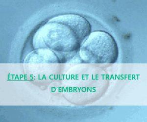 CULTURE-ET-TRANSFERT-EMBRYONS